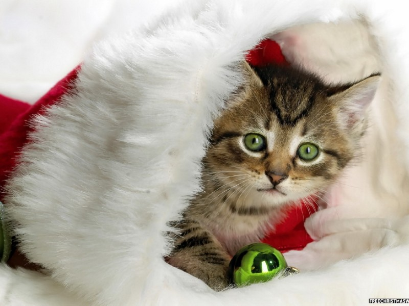 Cute Christmas Kitty