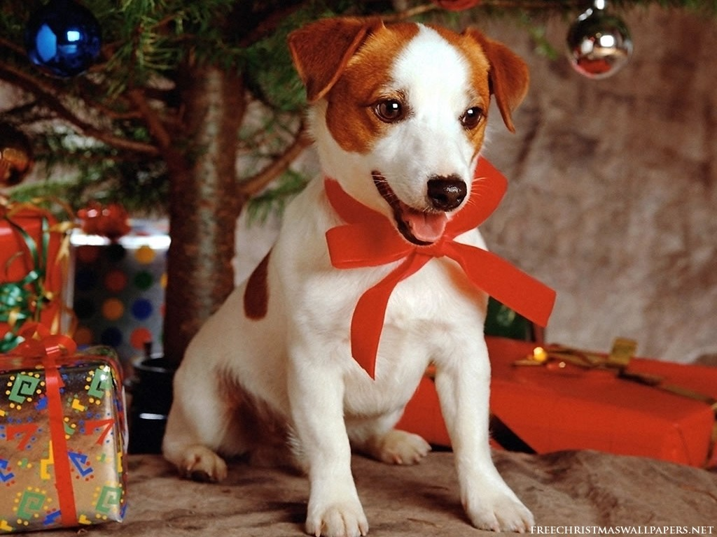 Sweet Dog Under Xmas Tree