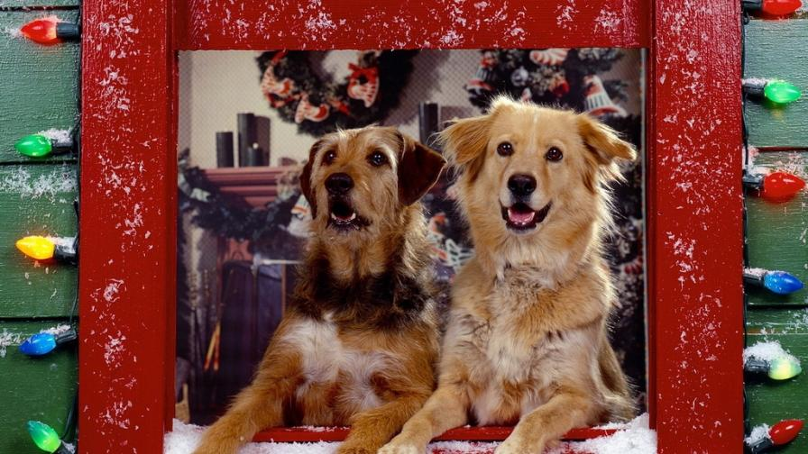 Christmas Dogs Watching