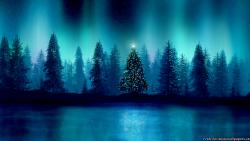 Cold Winter Nature Night