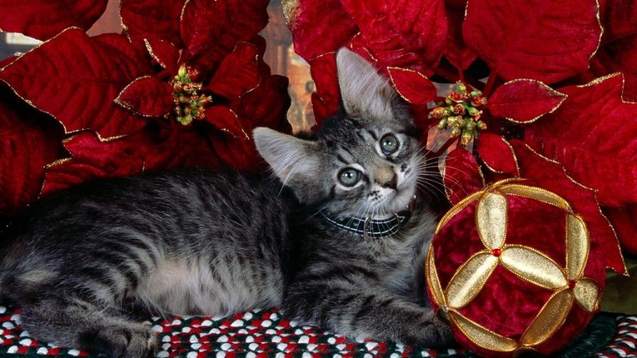 Kitty Xmas Ball Of Joy