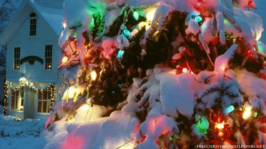 Xmas Nature Lights